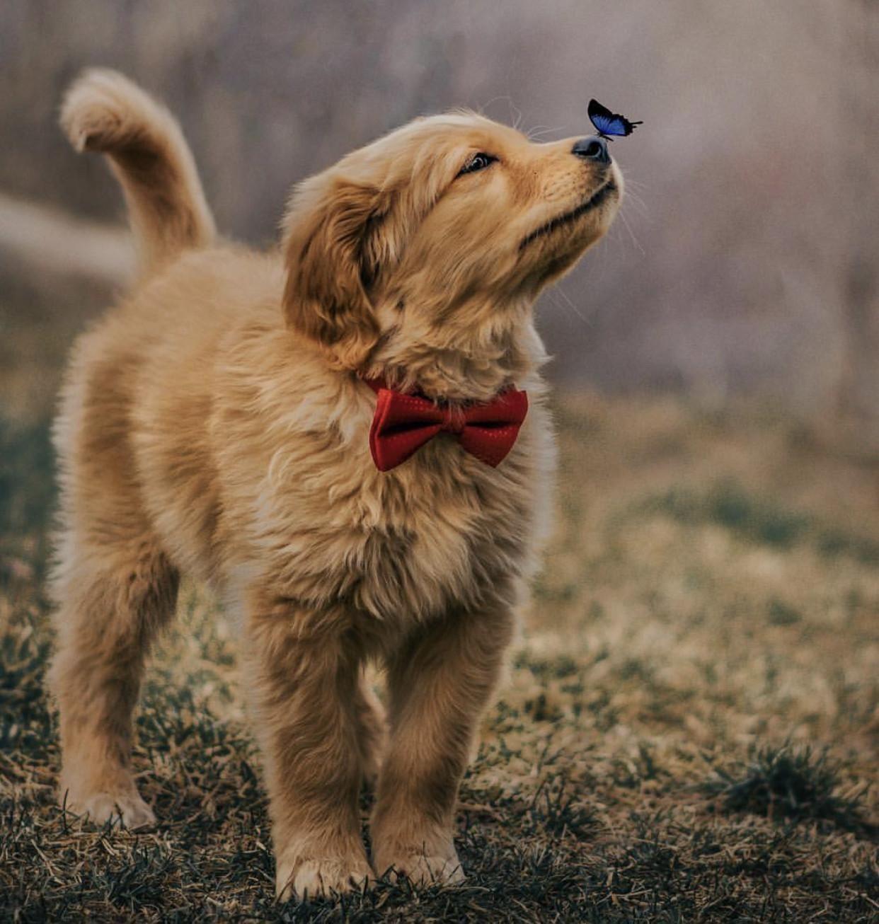 Pin Von Barbara Ruegsegger Auf Cute Animal Picts Niedliche