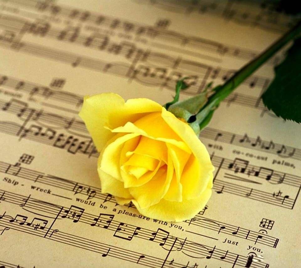 Popular Wallpaper Music Rose - 8aeb2631e38940560a2dd77ea87cd986  Gallery_392111.jpg