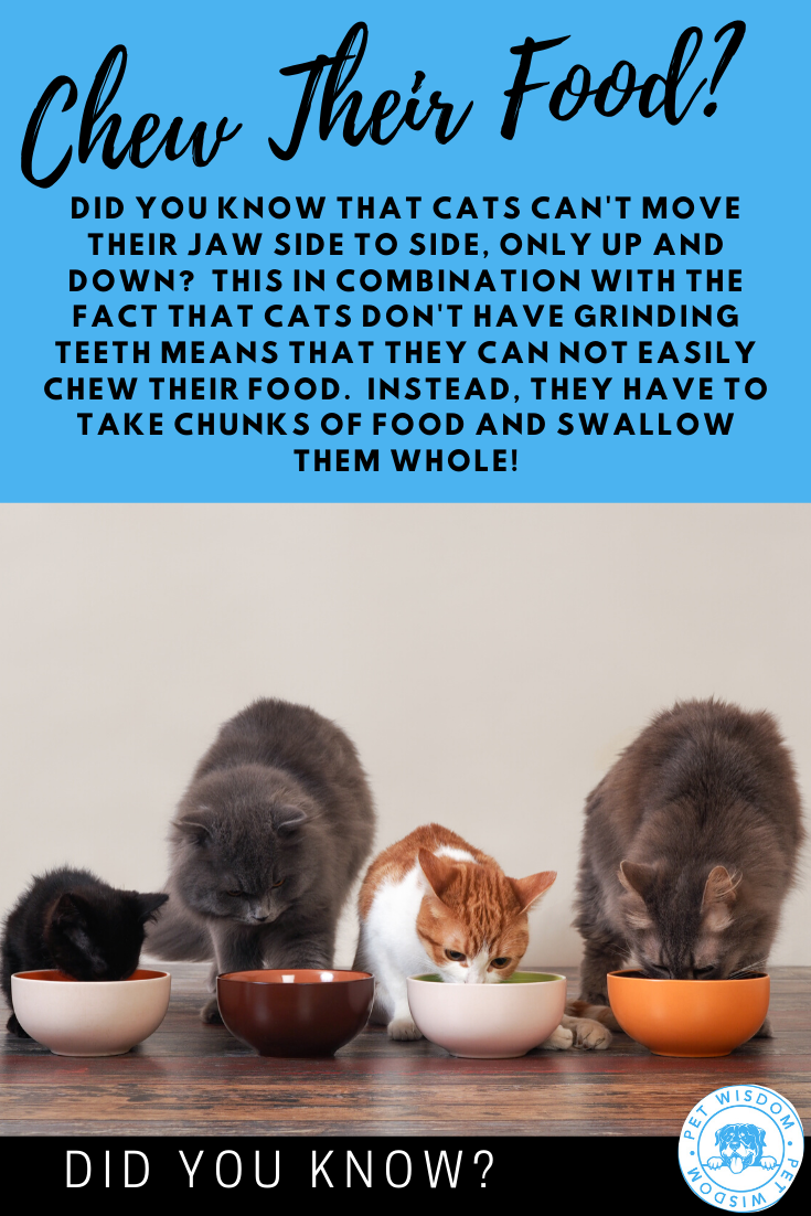 Chew Their Food Cat Parenting Kitten Love Cat Mom