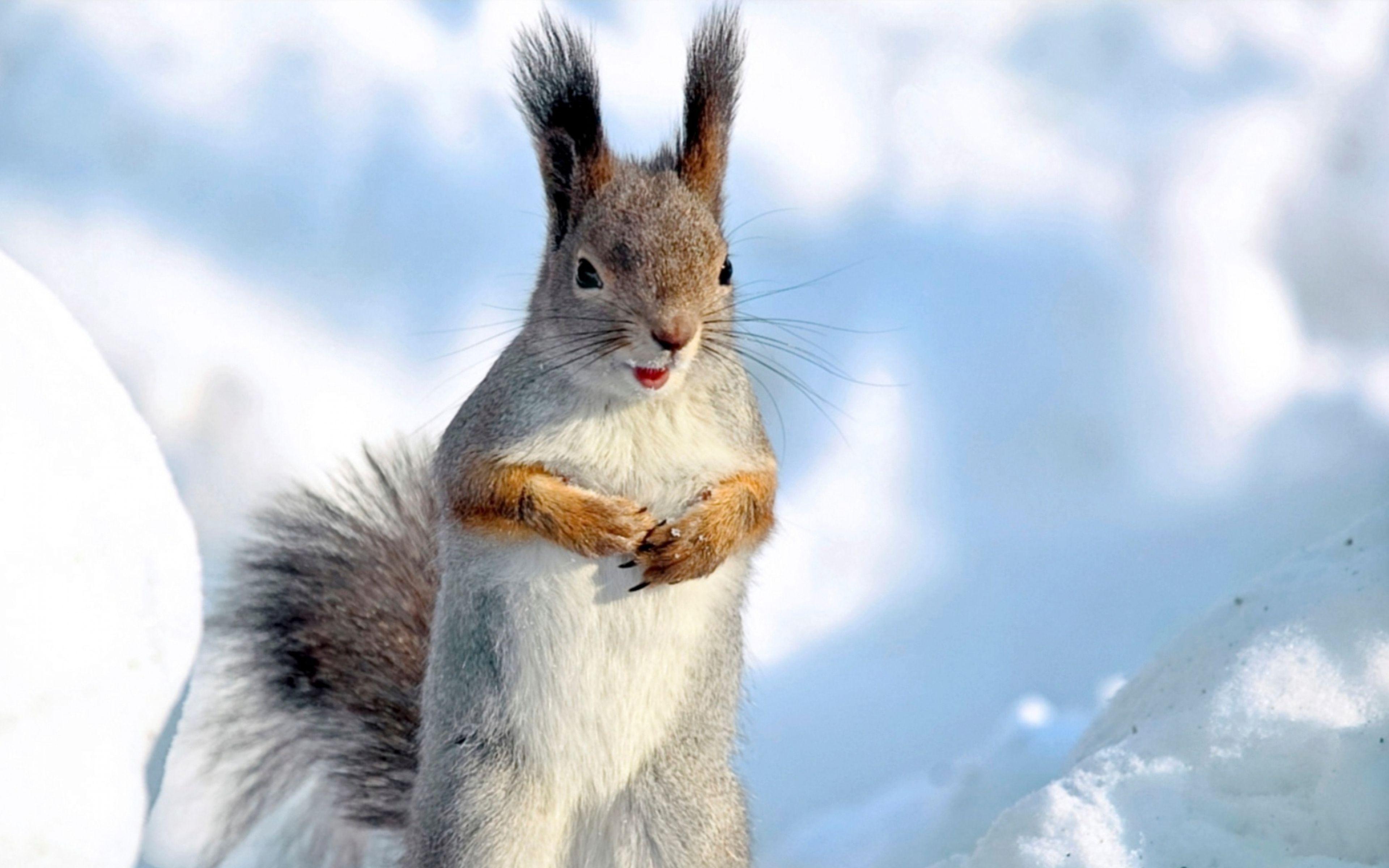 High Resolution Wallpaper Wildlife: Winter Animal Wallpapers High Resolution