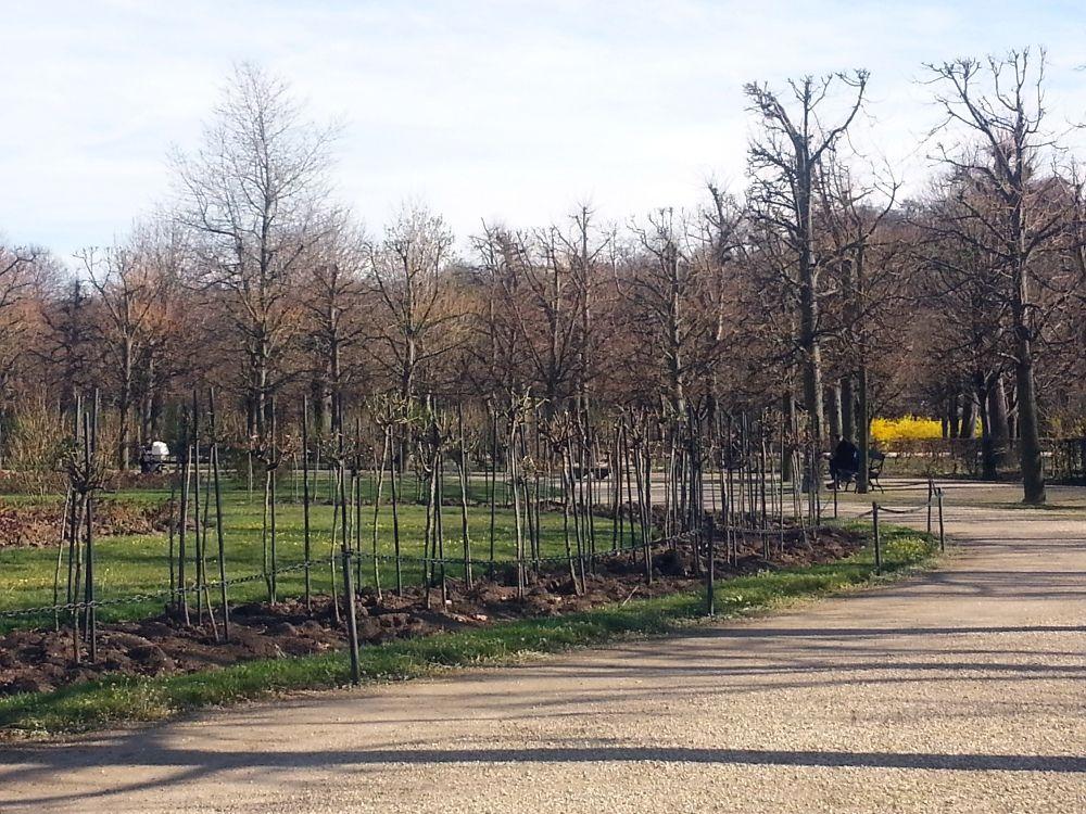 Rose Garden, Schönbrunn, Vienna, 20.03.2014