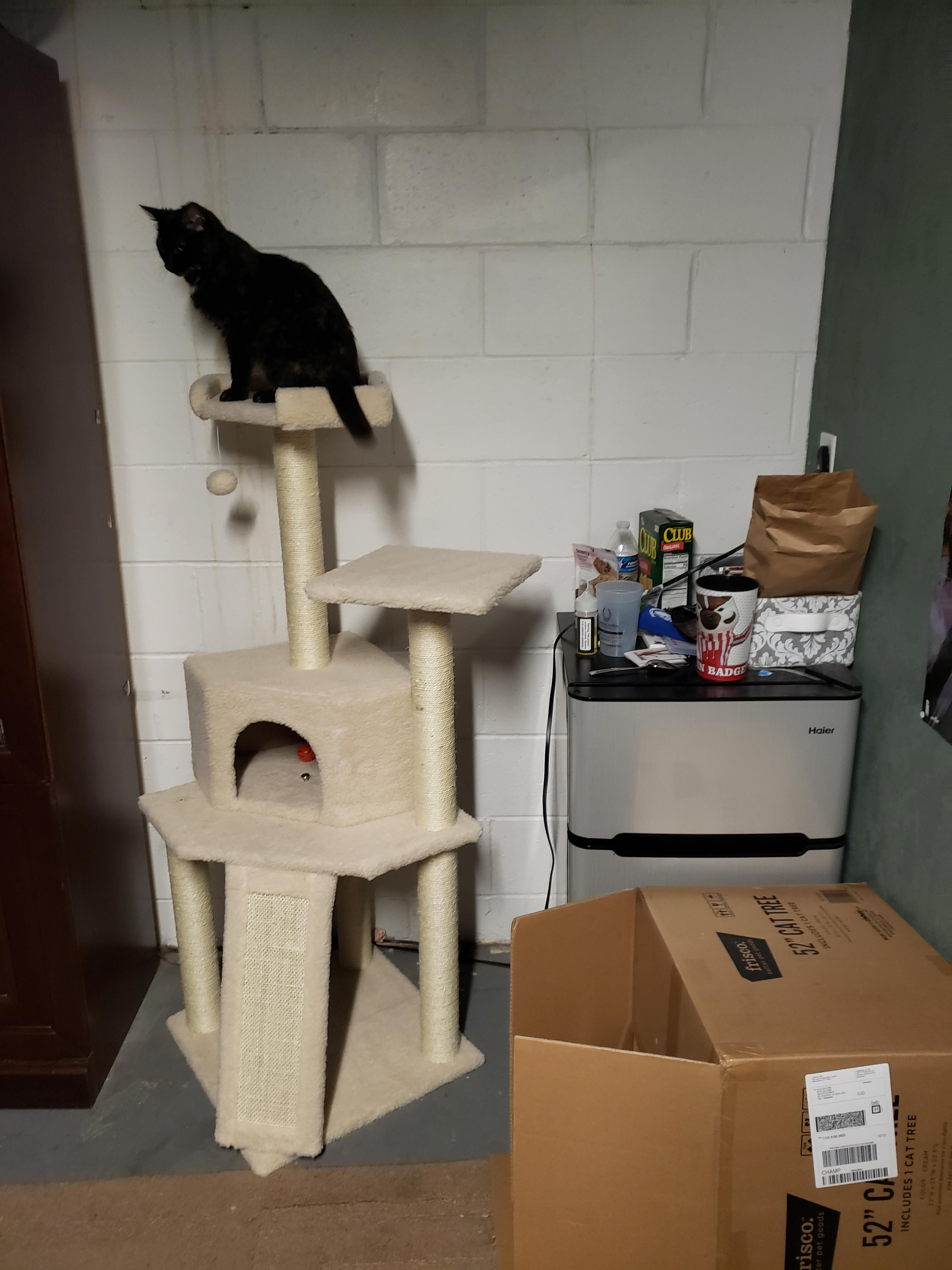 Someone Likes Their Cat Tree Https Ift Tt 2nx8wto Cat Pictures