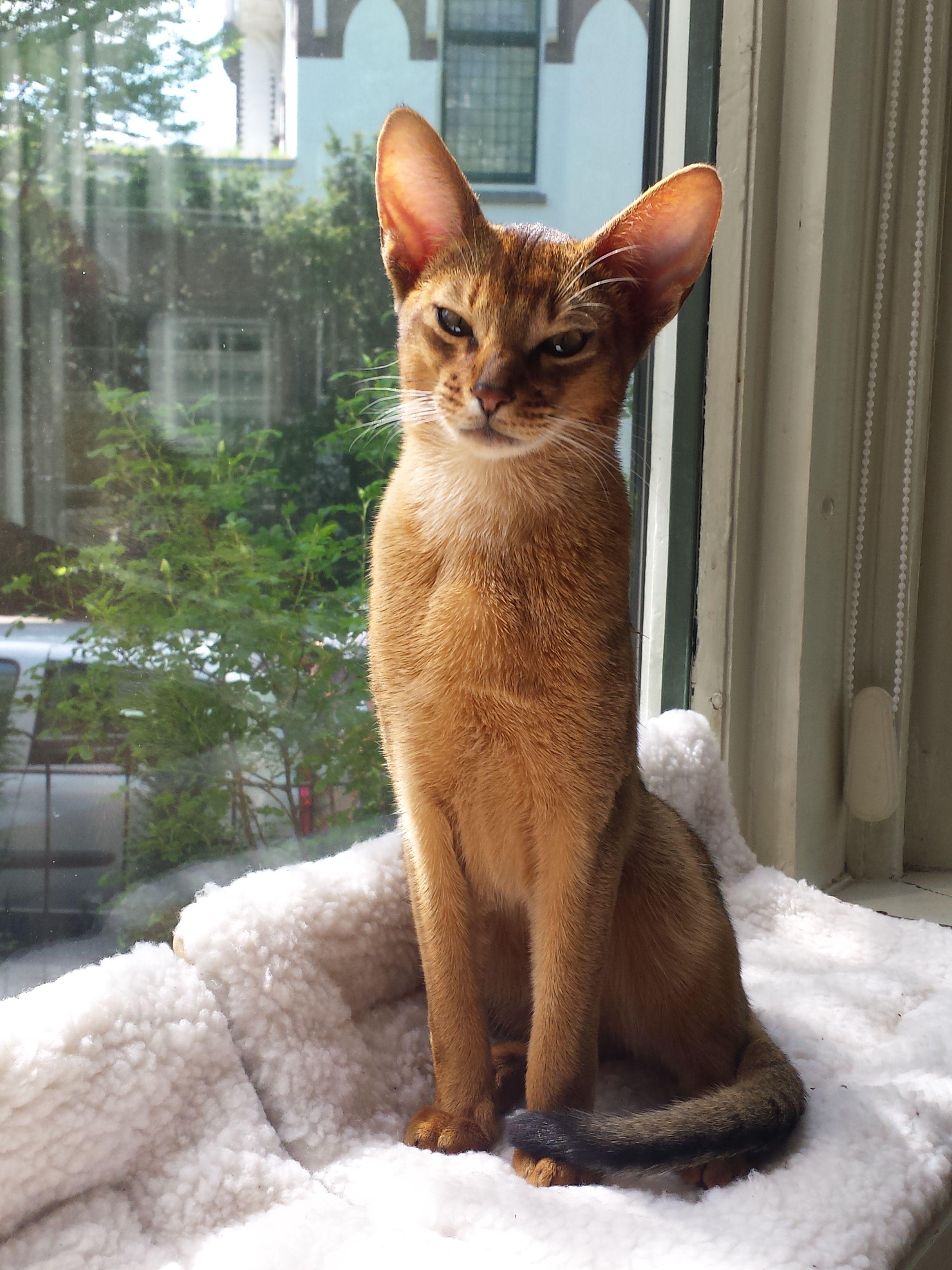 18++ Animal crossing egyptian cat ideas in 2021