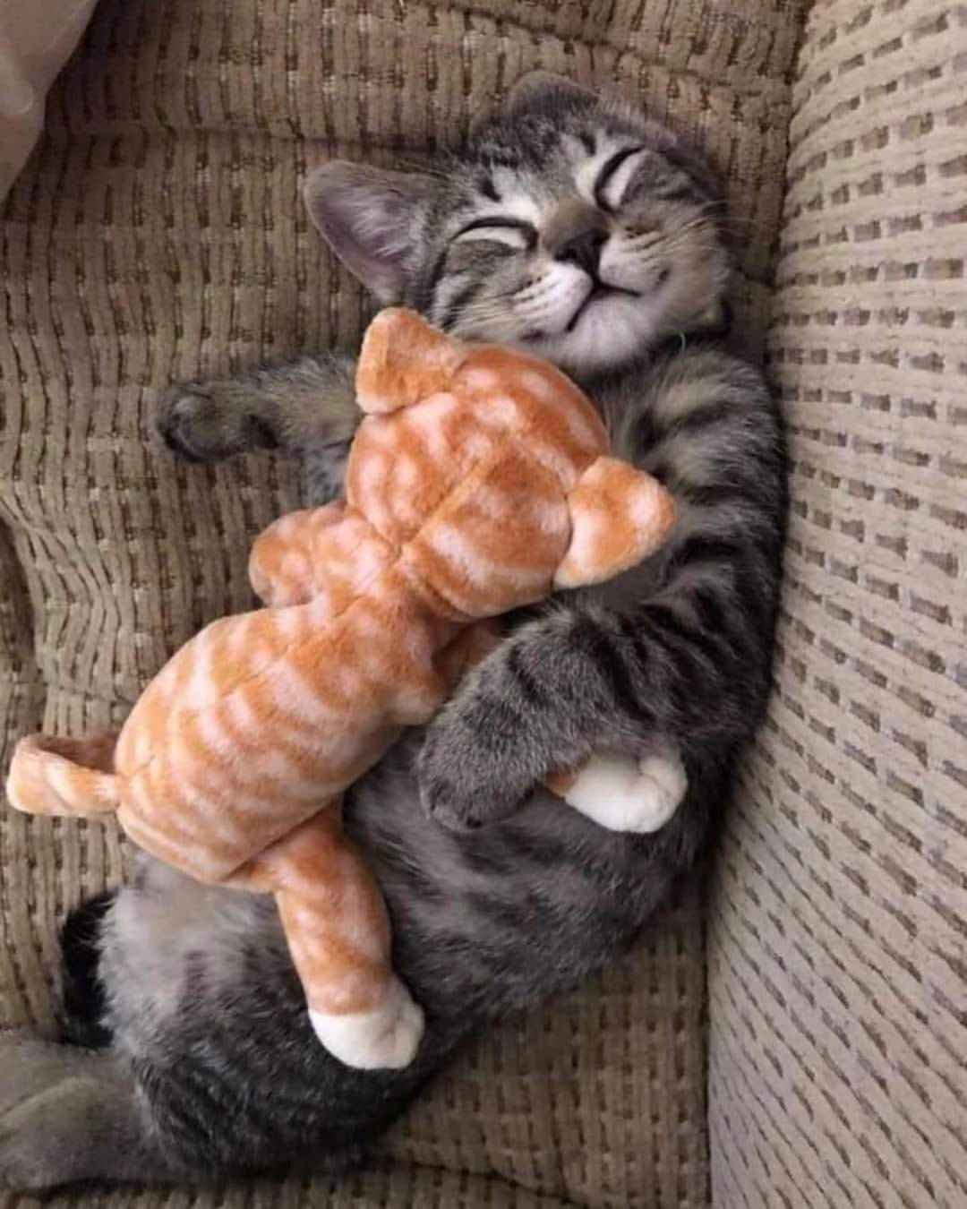 Pin By Lori Lamb On Cutie Catz In 2020 Cute Puppies Kittens Cutest Cats And Kittens