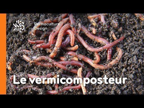 La Minute Permaculture   Le Vermicomposteur Une Boite A Vers