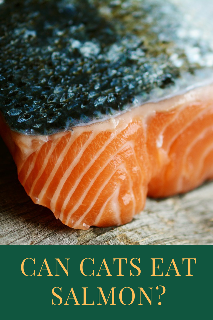 Can Cats Eat Salmon Food, Cooking salmon, Best cat food