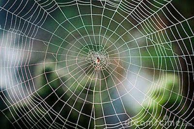 Mandala Madness Natural Spirals Spirals In Nature Patterns In Nature Spider Web