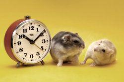 hamster time!