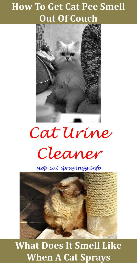 Best Way To Clean Cat Urine Smell From Carpet