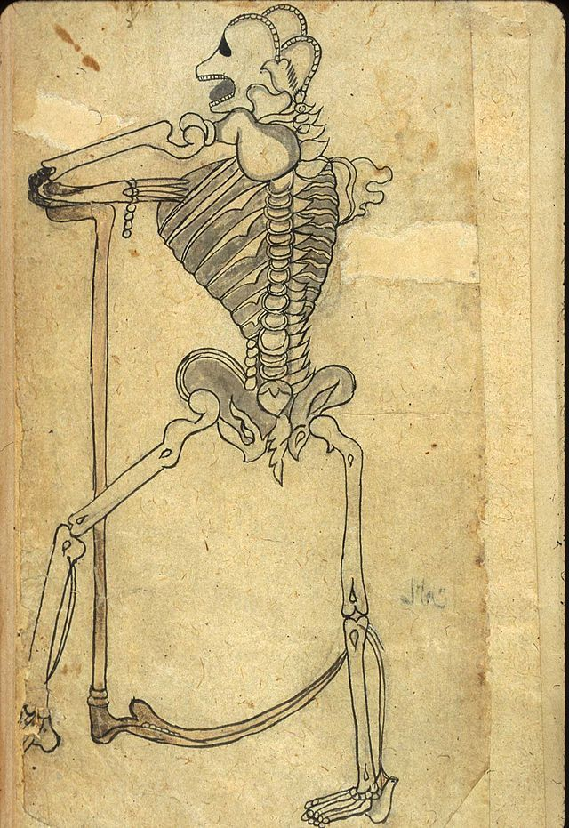 Categoryearly Anatomical Illustrations Wikimedia Commons