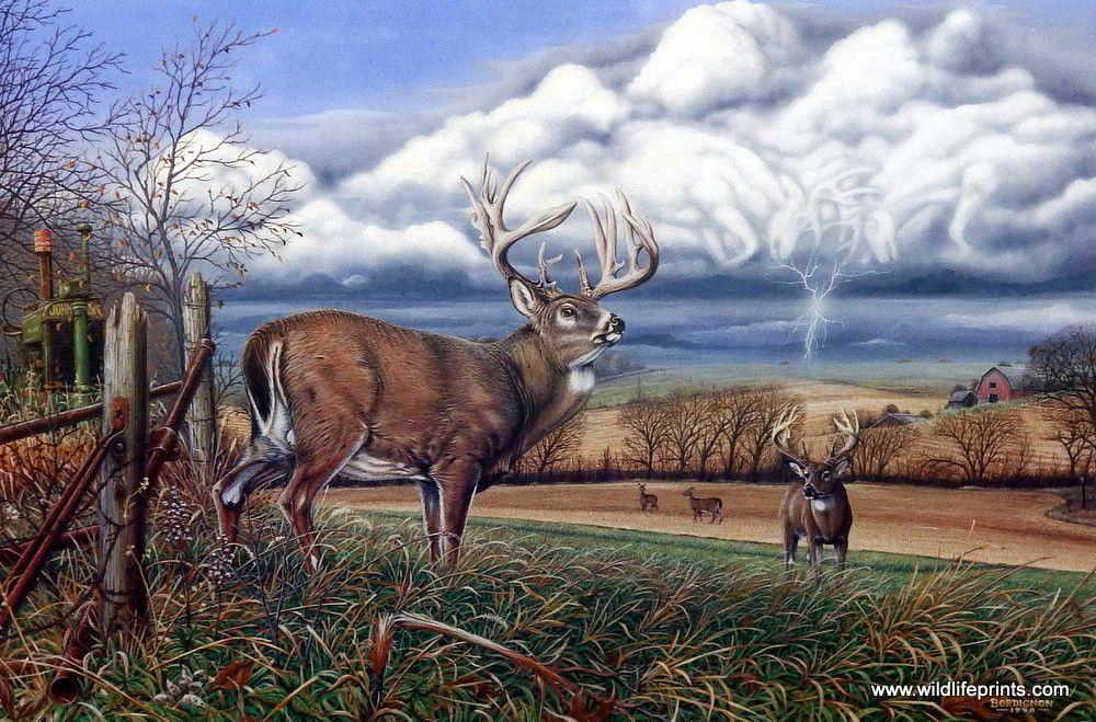 Artist Greg Bordignon Unframed Whitetail Deer Print When ...