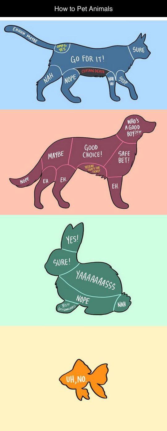 How To Pet Animals   random   Funny animals, Animals, Funny