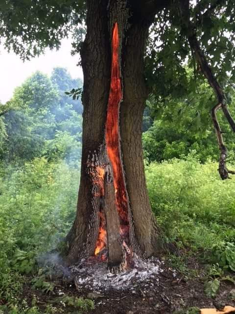 Lightning-Struck Tree
