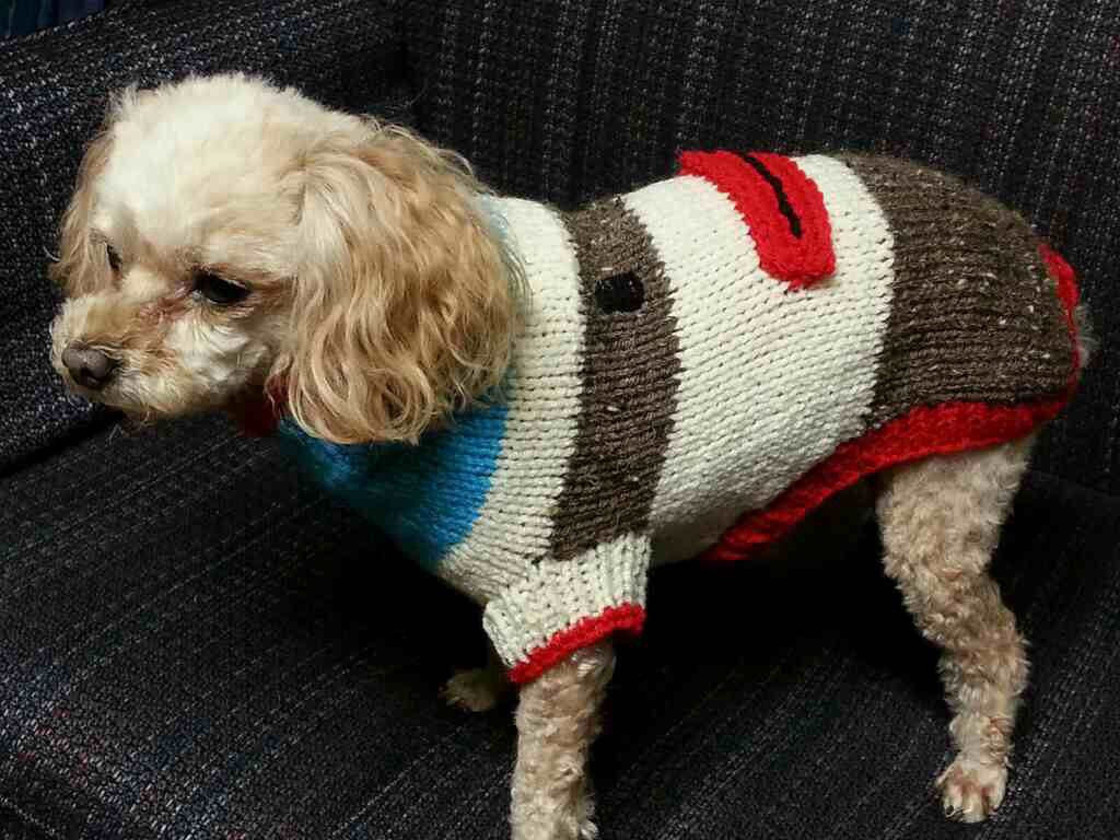 Sock monkey dog sweater i made for a friend httpravelry sock monkey dog sweater i made for a friend httpravelry bankloansurffo Gallery