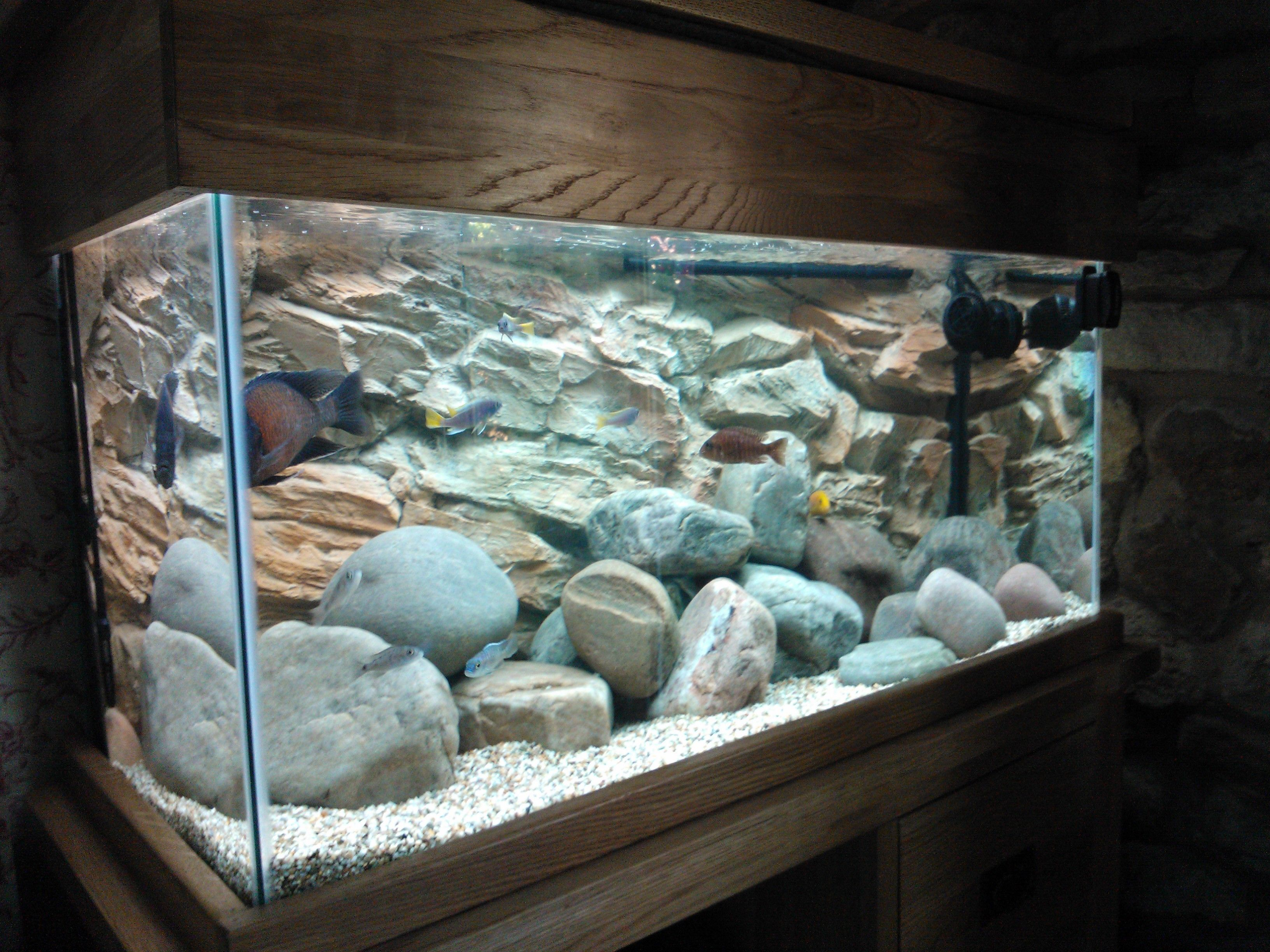 Fish aquarium in downtown toronto - 3d Rock Background