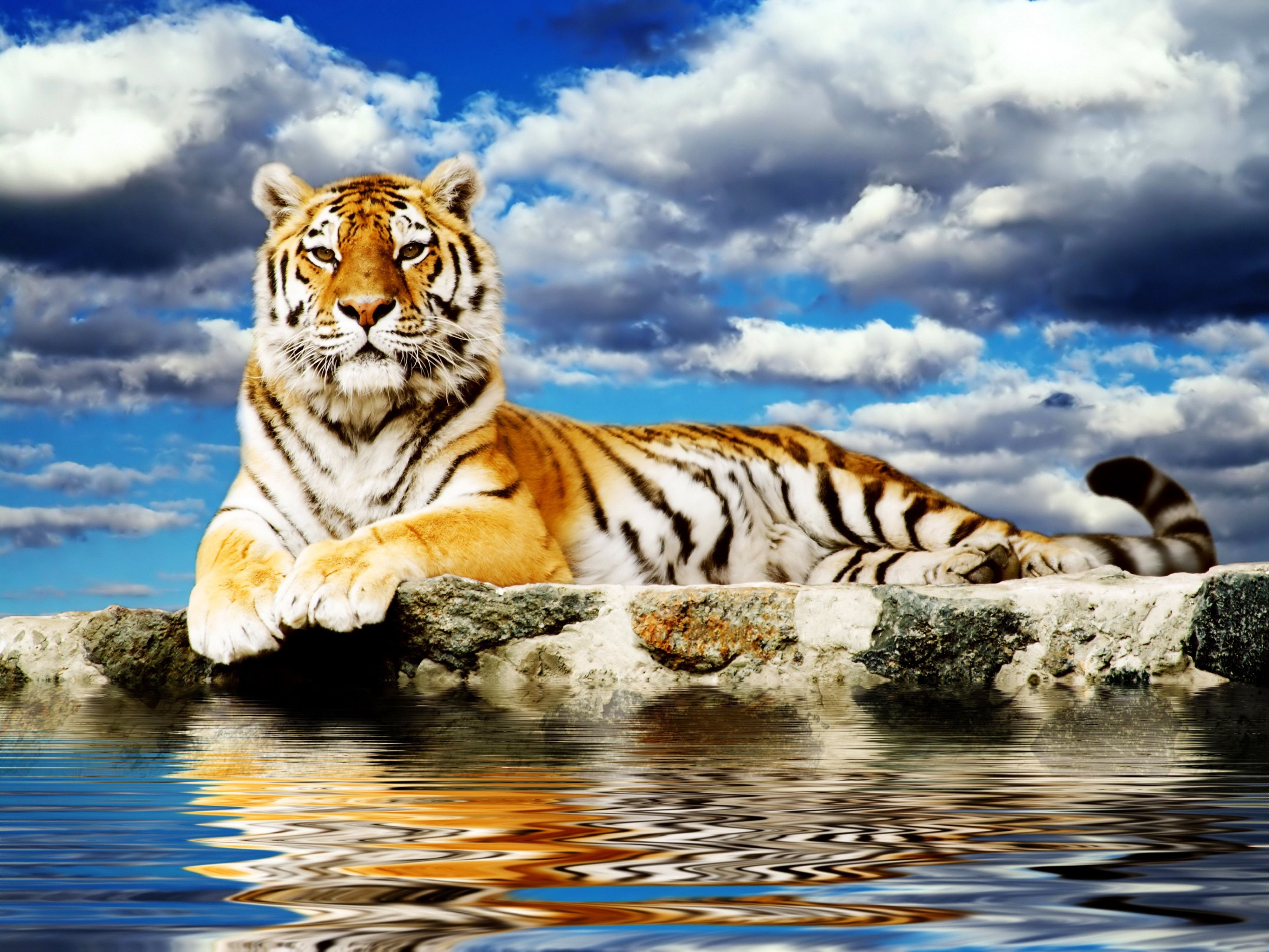 Majestic Tiger Desktop Background wallpaper free   Tigers ...