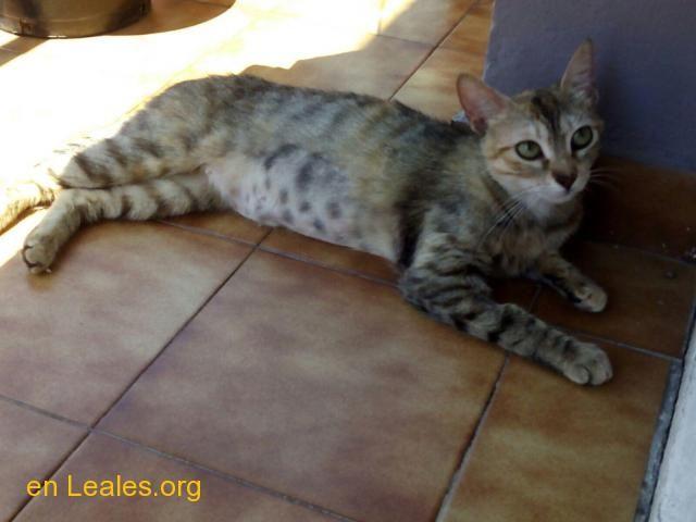 Gatos En Adopción España Valencia Adopcion Gatos Gatitos En Adopción