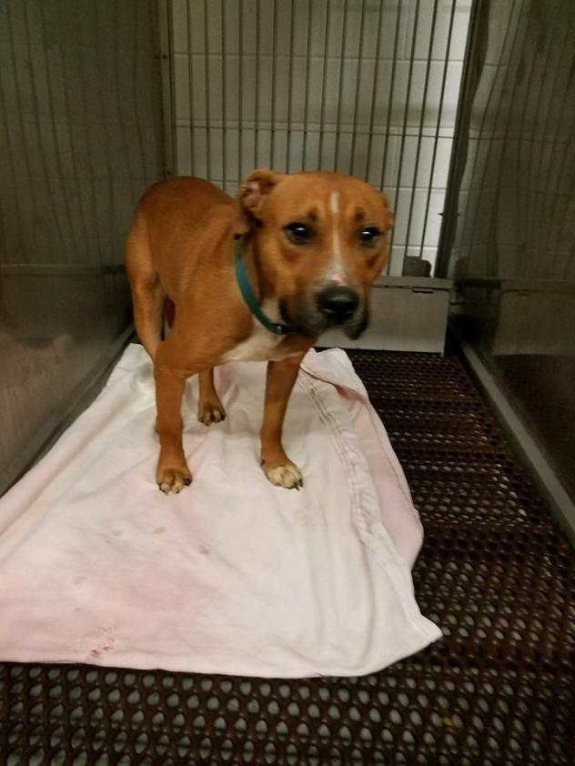 Adopt Kennel 08 Was 103 On Petfinder Redbone Coonhound Dog Kennel Kennel