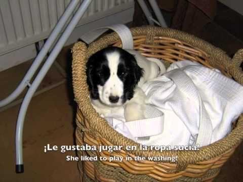 Spanish listening practice - A New Puppy
