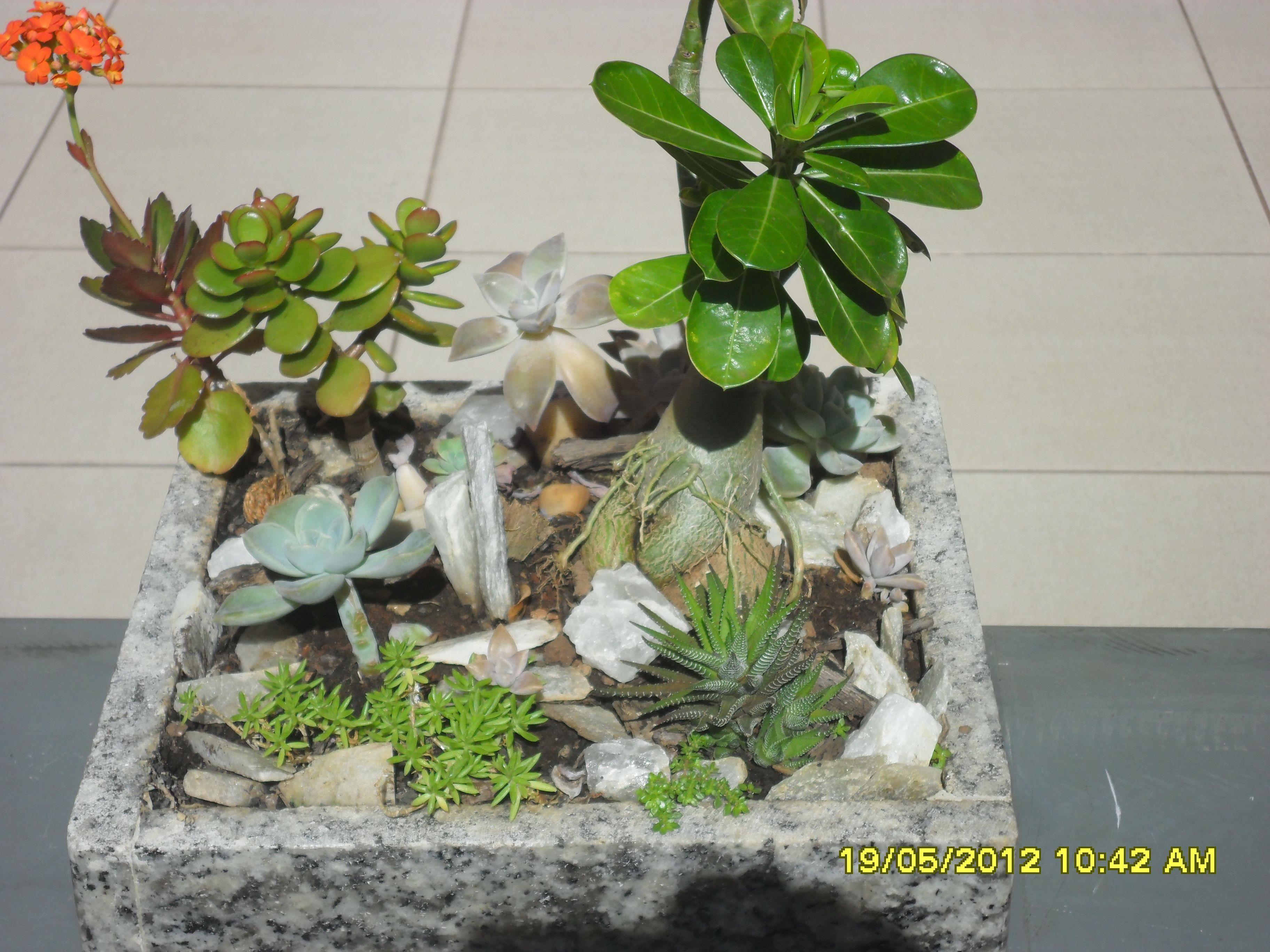 Mini jardim de suculentas, cactos e flor do deserto feito por minha mãe!!Lindo!