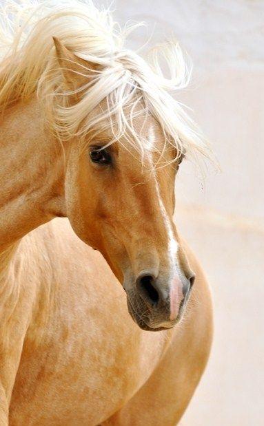 Milk and Honey horse by Ranch El Castille