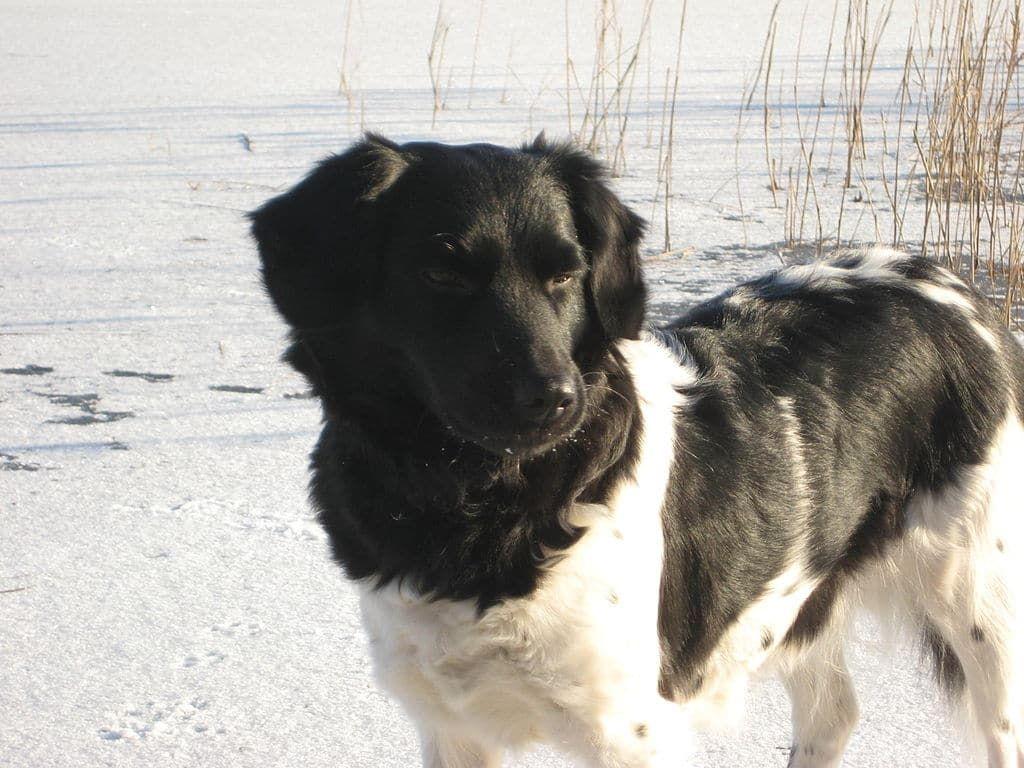 Loading Rare Dog Breeds Big Dogs Dogs
