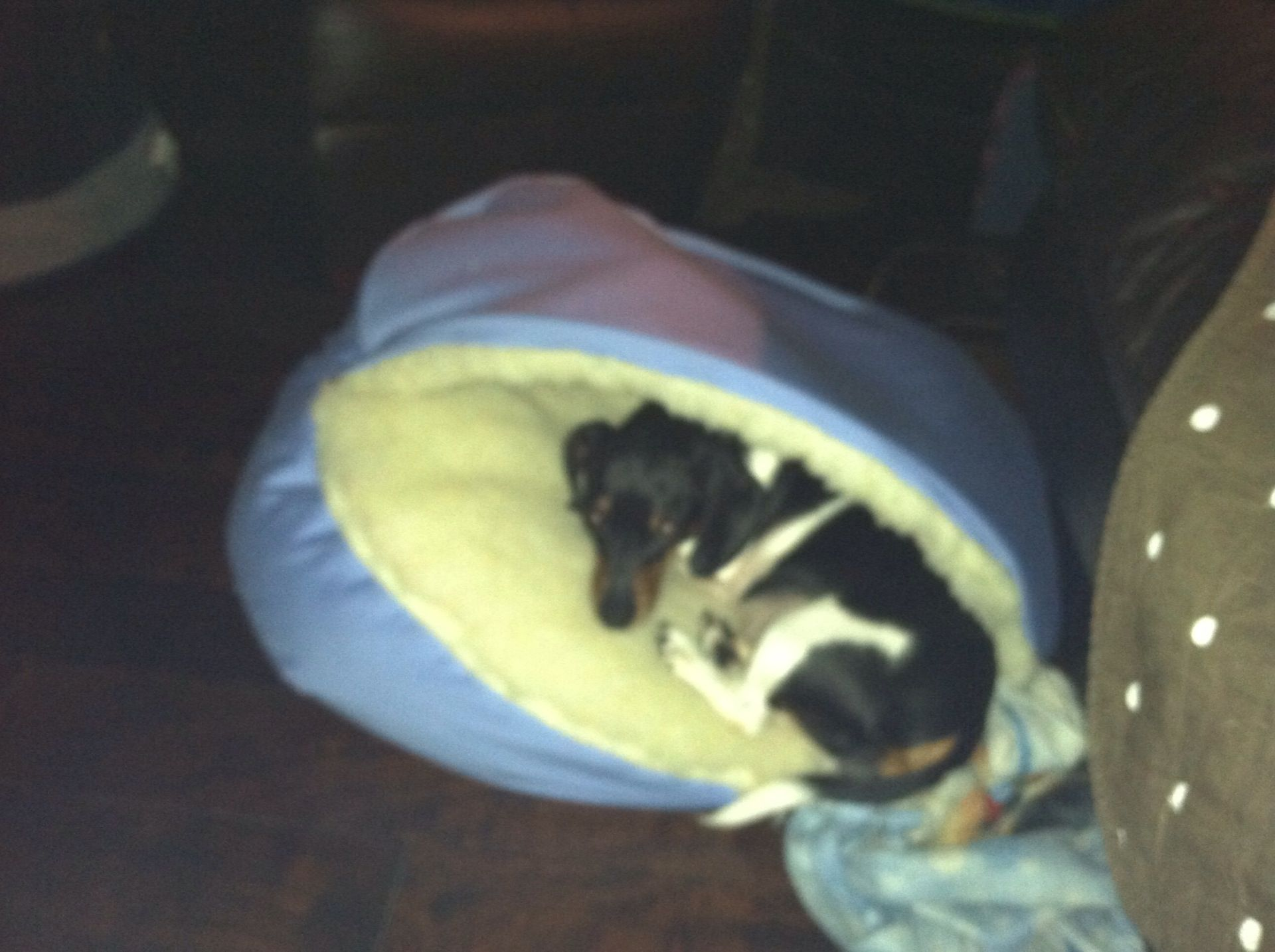 Dog Indestructible Bed