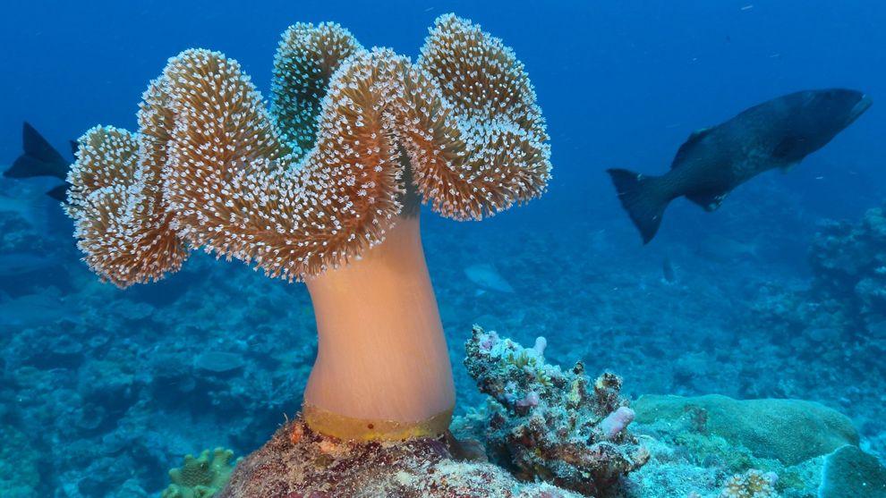 Plant Life Under The Sea | Ocean | Pinterest | Under the sea ...