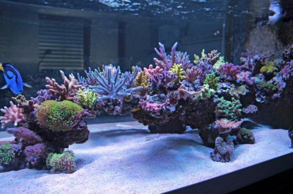 Cool Reef Tank Aquascapes?   REEF2REEF #SaltwaterAquariumSetup