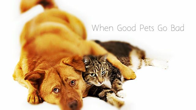 When Good Pets Go Bad Introducing Dog To Cat Cute Cats And Dogs Pets