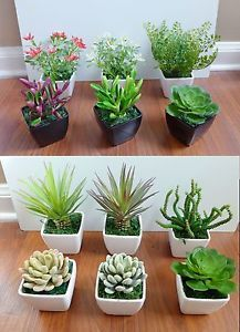 Small Plants For Small Pots   Google Search