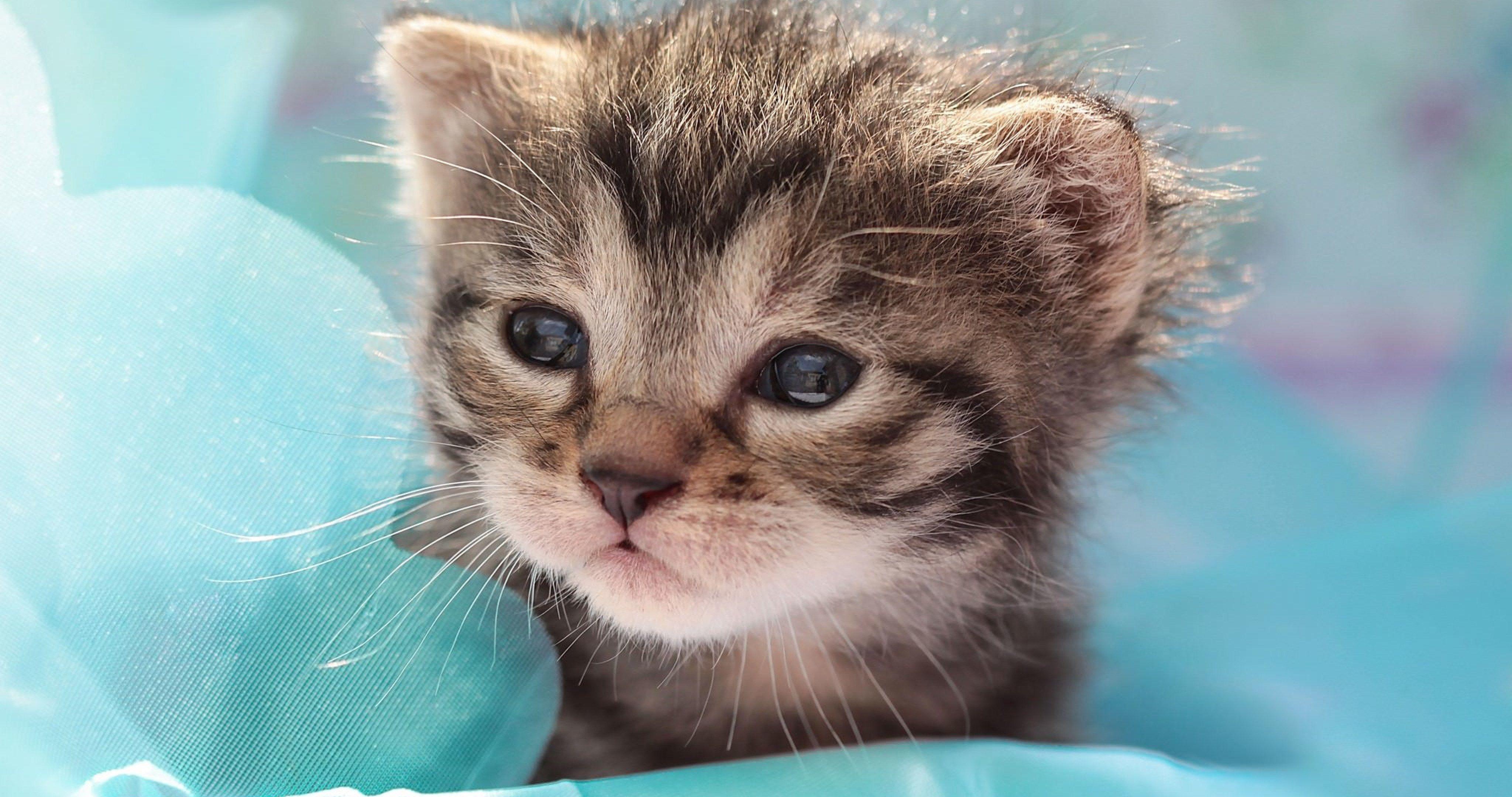 cute cat 4k ultra hd wallpaper Cute kitten gif, Kittens