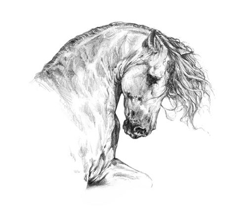 Horse Head Profile Drawing Galleryhipcom The Hippest