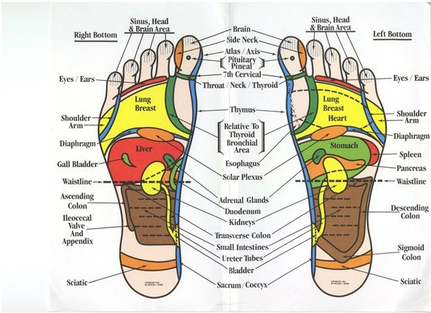 Green Holisticlifestyle How You Can Learn To Do Foot Reflexology On Yourself And Your Loved Ones Reflexology Foot Chart Foot Reflexology Reflexology