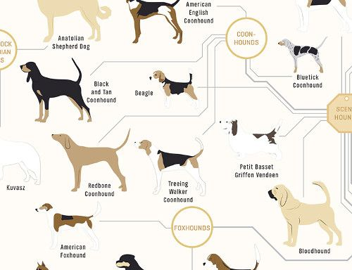 The Diagram Of Dogs A Dog Breed Infographic Poster By Pop Chart