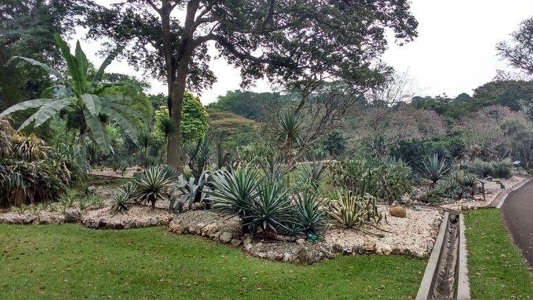 Mexican Garden, Bogor Botanical Garden, Indonesia