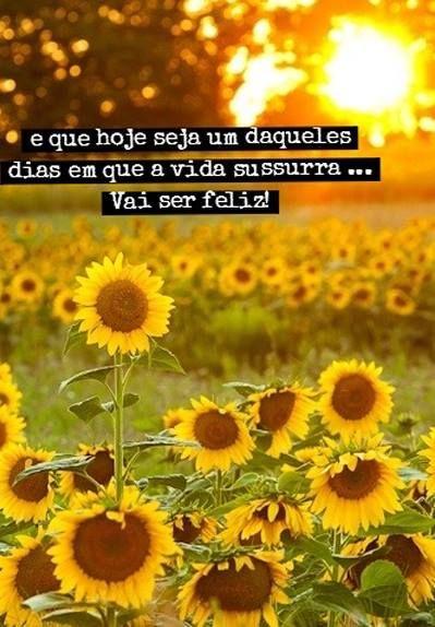Boa Noite Com Imagens Campo De Girassois O Poder Das Flores