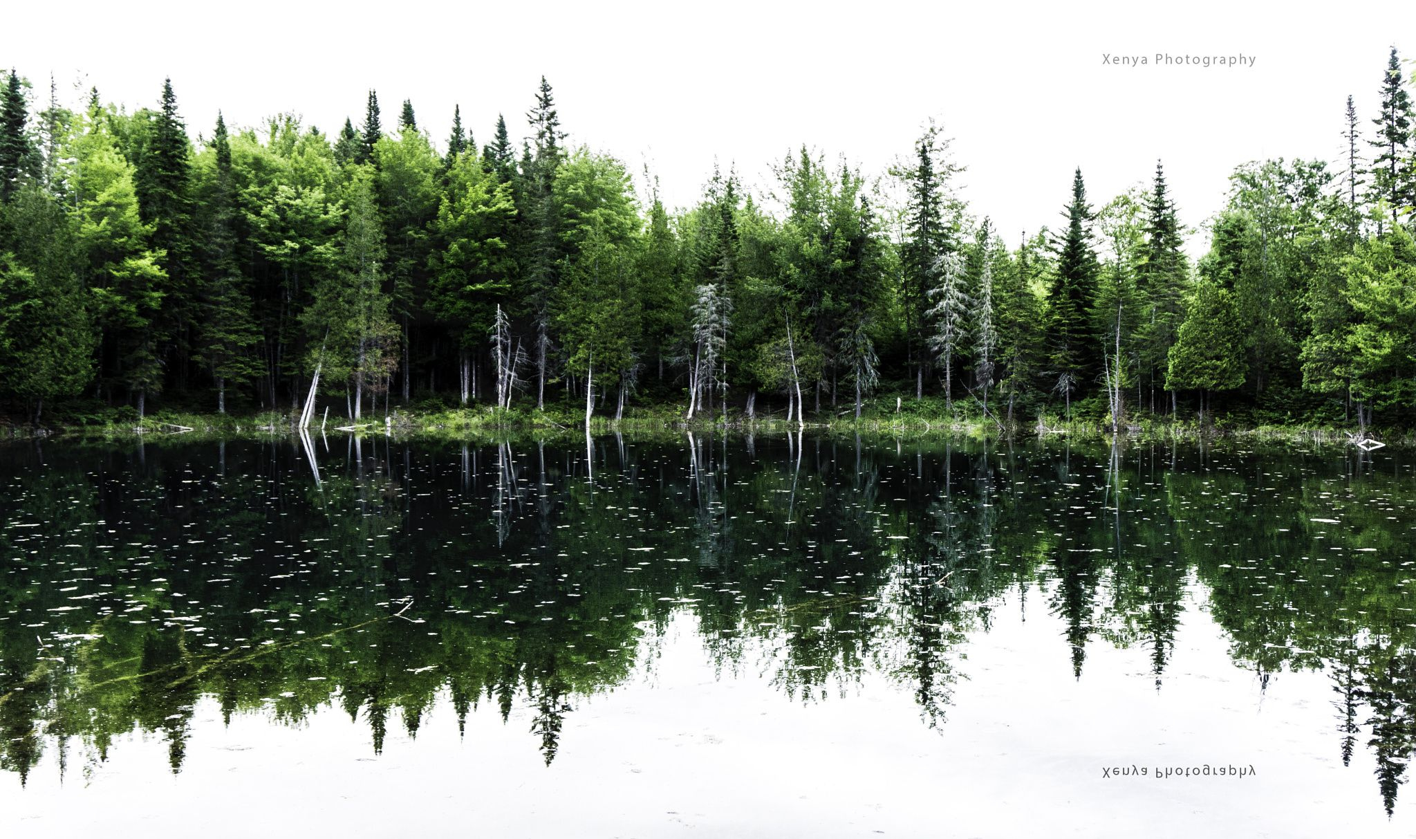 Refllections Landscape Photography Xenya Photography Gaspesie Quebec Canada Pusa Studios White Sky Reflection Copyright Images