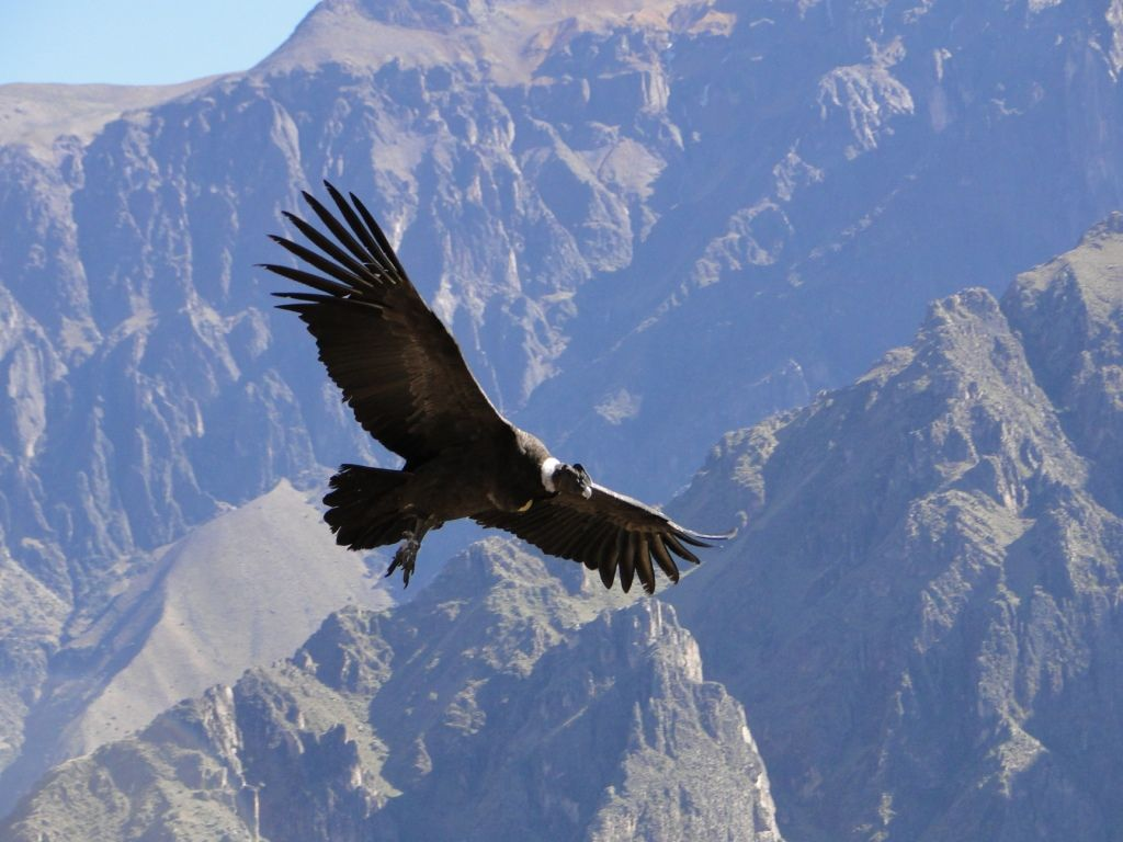 Charla Sobre El Programa Condor Andino Andino Natureza Animais