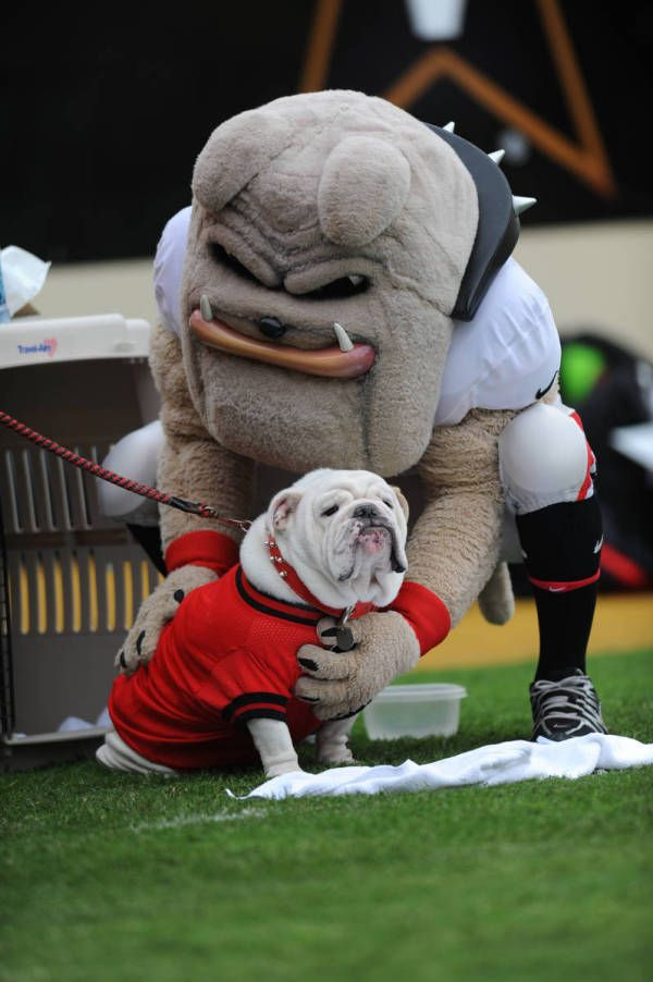 Georgia Bulldogs Mascot Hairy Dawg And Uga Vii 2009 Vanderbilt