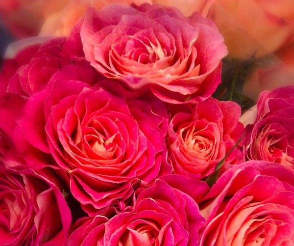 Flotte blomster