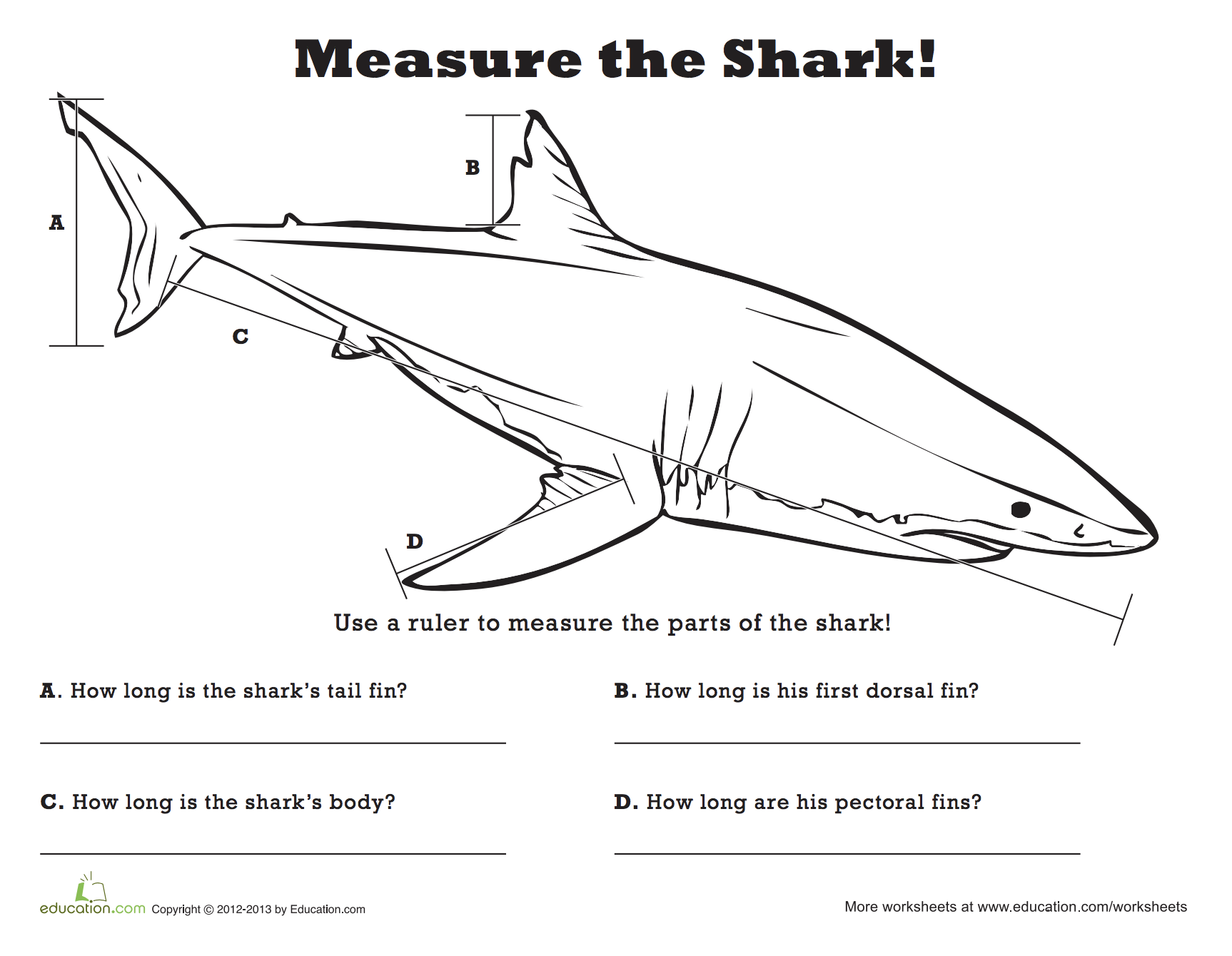 Measure The Shark