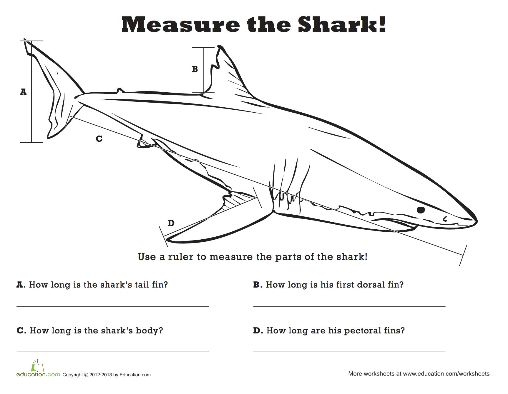 Measure The Shark
