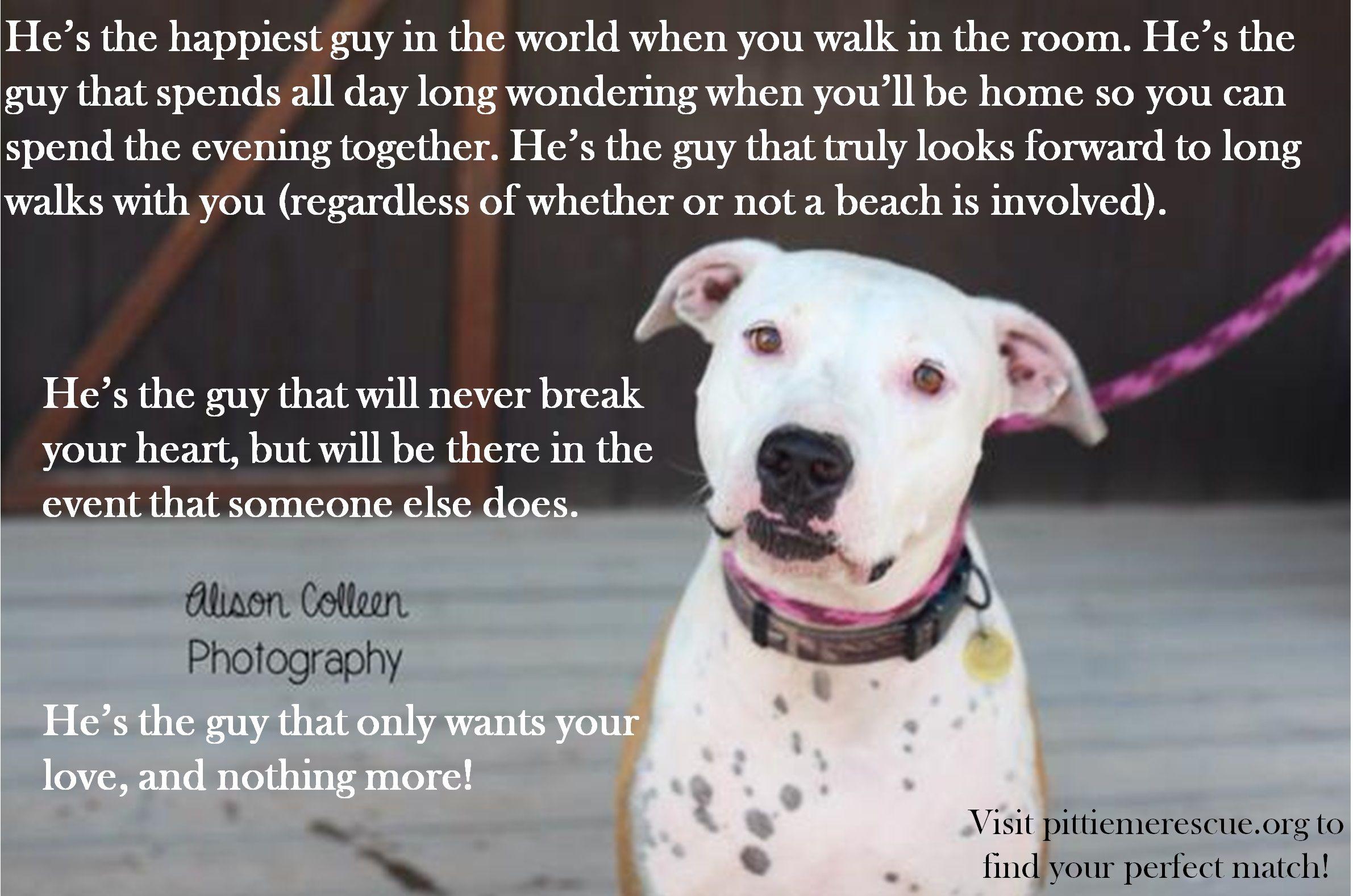 Puppy rescue gilbert az