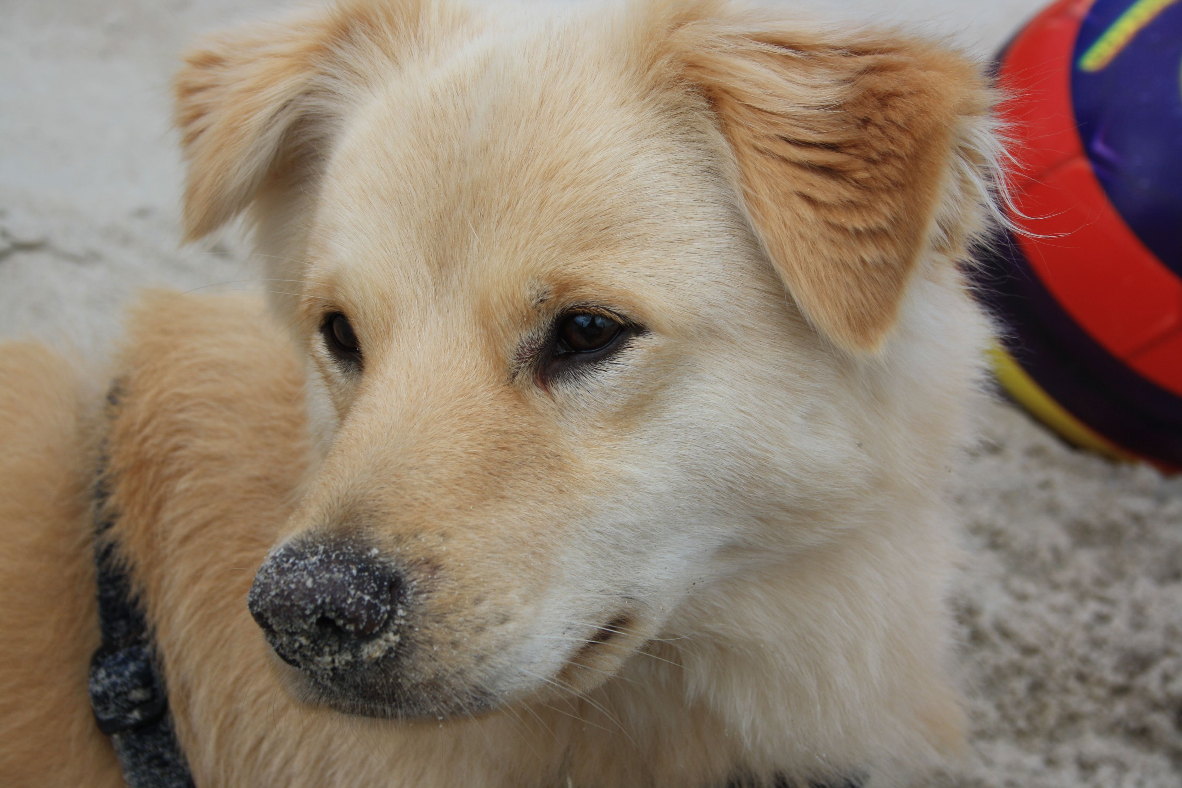 Lucky In 2020 Hunde Mischling Tiere