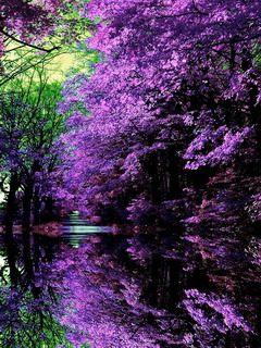 Download Purple Japanese Garden Mobile Wallpaper Mobile Wallpapers Taman Jepang Pemandangan Fotografi Alam