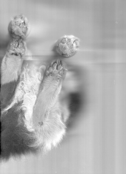 Cata, from The Cat Scan
