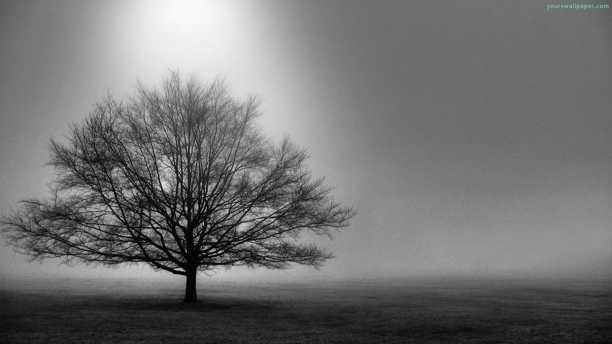 Tree Black And White Hd Desktop Wallpapers 4241 Black And White Tree Black And White Wallpaper Tree Desktop Wallpaper