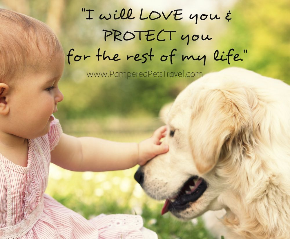 cute quotes about your dog
