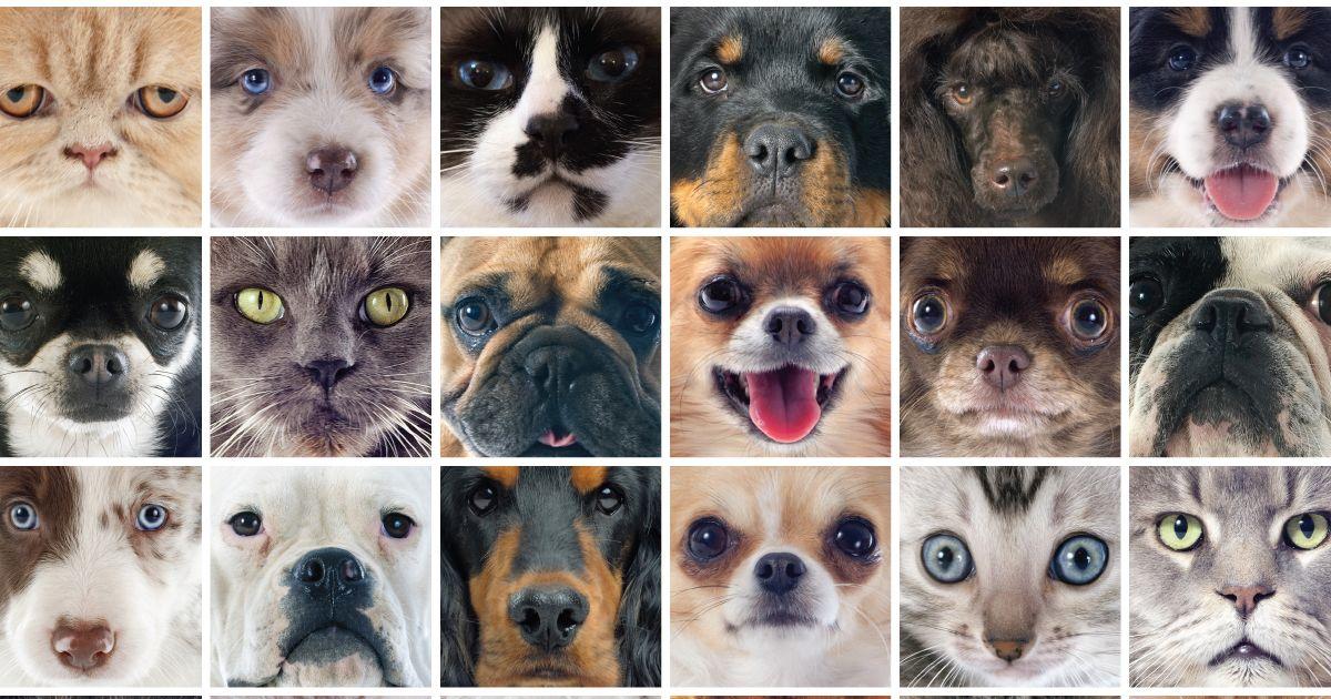 ESA Laws Support animal, Service animal, Emotional